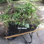 I filled this wheelbarrow at least 12 times from one patio area!